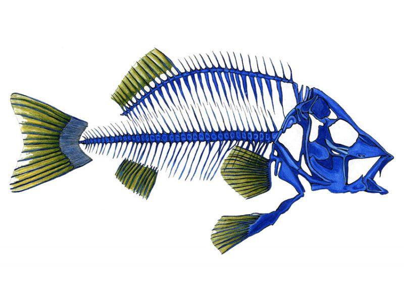 Fischblau - Filzstift 2005