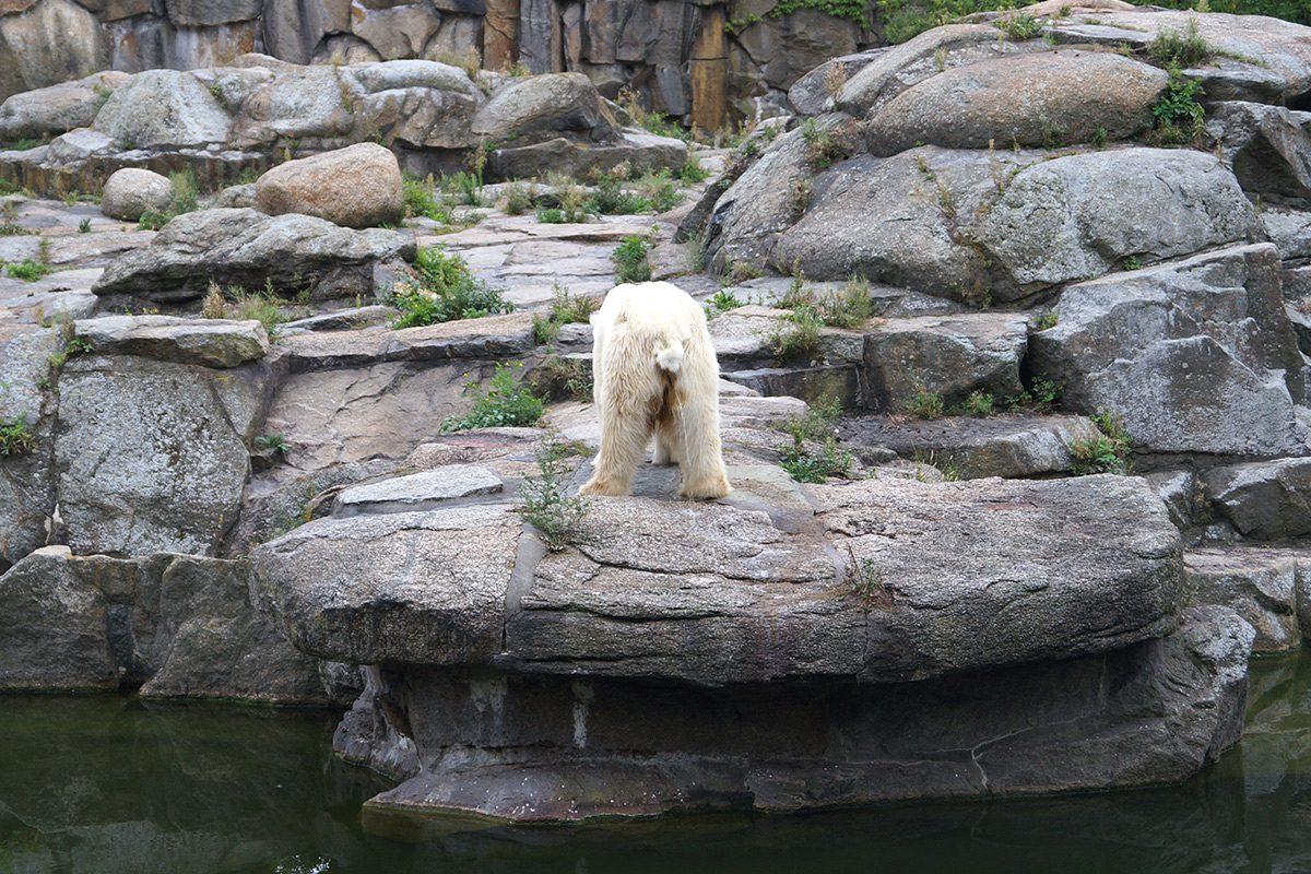 Zoo - Rostock